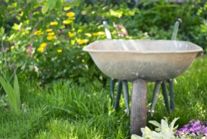 wheelbarrow in the garden