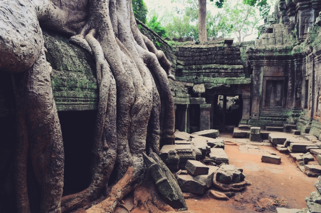 Huge Tree Roots At Angkor Wat Temple Ruins