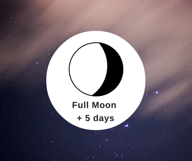 What to Watch FM+5 Moon Cycle Today