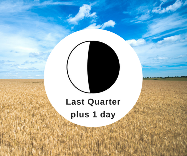 The Hidden Gem in Last Quarter Moon Phase is...